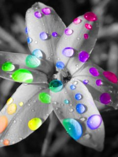 Flower with colorful drops wallpaper
