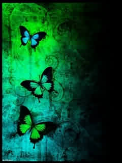 black butterfly wallpaper 1280