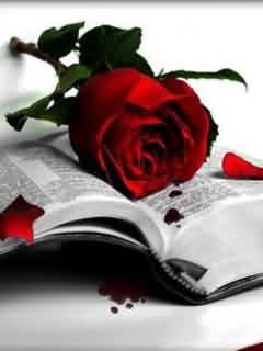 Red-Rose-Wallpaper.jpg