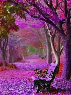 No Rain No Flowers Wallpaper