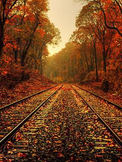 Autumn Track Wallpaper