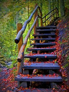 Steps In Nature Wallpaper
