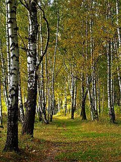 birchgrove_4ws2s8ew