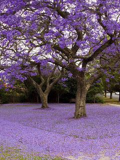 Purple Autumn Nature