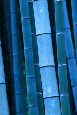 Download blue bamboo nature iphone wallpaper mobile - 3g wallpaper hd ...