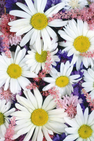 This White Flowers iphone wallpaper is compatible for iPhone 3G ...