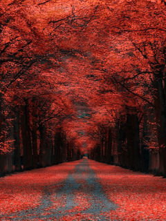 Autumn Lane Kassel Germany