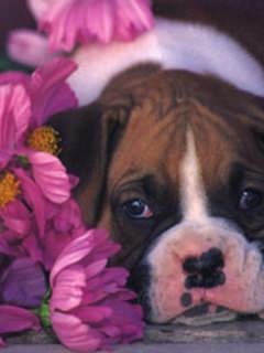 Dog With Purple Flower