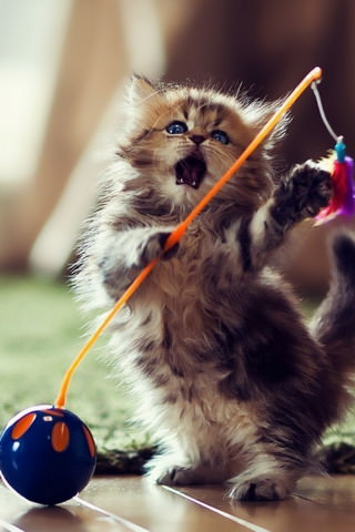 Lovely-Playful-Kitten-ilikewallpaper_com