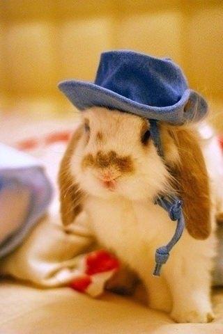 Style small rabbit