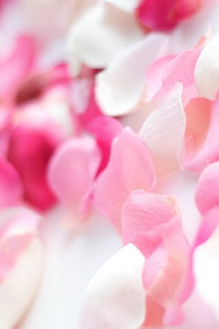 Download Pink Orchid Flowers Iphone Wallpaper Mobile