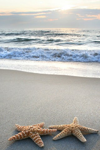 Sea beach starfish
