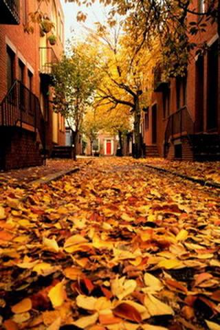 Autumn, Philadelphia, Pennsylvania