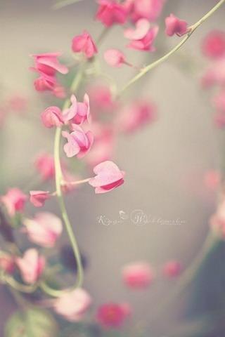 Pretty-little-flowers-iphone-wallpaper-ilikewallpaper_com