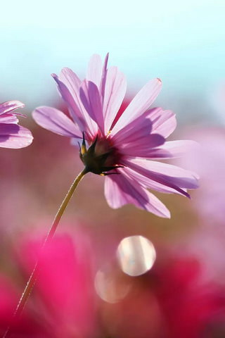 Cosmos-iphone-wallpaper-ilikewallpaper_com